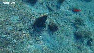 Akdeniz ve Egeden sonra Marmarada toplu pina ölümü