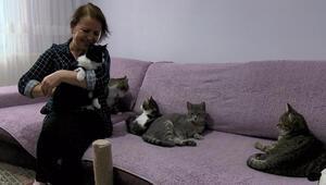 Beylikdüzünde evinde 30, bahçe ve yollarda 170 kediye bakıyor