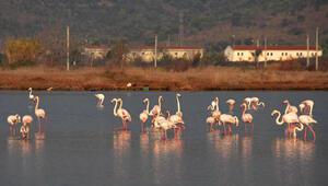 Flamingolardan sulak alanda görsel şölen