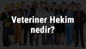 Veteriner Hekim nedir, ne iş yapar ve nasıl olunur Veteriner Hekim olma şartları, maaşları ve iş imkanları