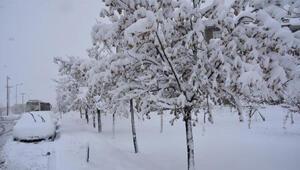 Bitlis'te 224 köy yolu kardan kapandı