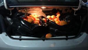 Portakal hırsızı jandarmadan kaçamadı