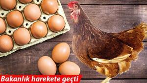Yumurta tavuk fiyatını solladı