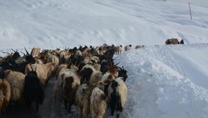 Hakkaride karda mahsur kalan çoban ve koyunlar kurtarıldı