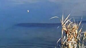 Tödürge Gölündeki dev yayın balıkları kuşları ürküttü