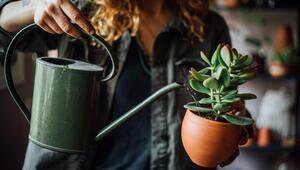 Uzaktayken bitkilerinizi sulamanın 5 harika yolu