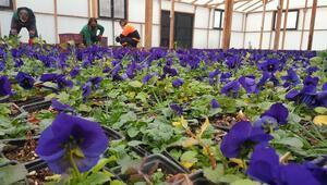Çankaya'dan çiçek satışı