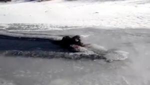 Nesli tükenmekte olan su samuru Ardahanda vatandaşlar tarafından videoya kaydedildi