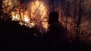 Sakaryada, 10 dönüm ormanlık alan yandı