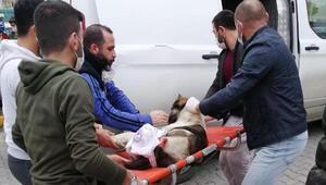 Başakşehirde magandalar sokak köpeğini silahla vurdu