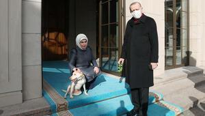 Emine Erdoğan, Cumhurbaşkanı Erdoğanı Leblebi ile birlikte uğurladı