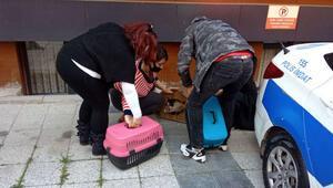 Aylin Sözerin kedileri veterinere götürüldü