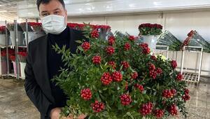 Yılbaşı çiçeği kokinaya yoğun talep