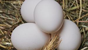 Fazla para verip bu tuzağa düşmeyin Organik yumurtayı anlamak için…