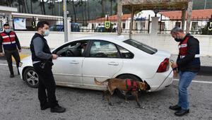 Marmarise gelenlerin araçları jandarmanın dedektör köpekleri ile arandı