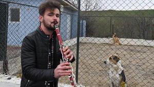 Sokak hayvanlarına klarnetle konser veriyor