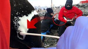 Türk profesör Antarktika seferinde keşfetti Dünyada henüz tanımlanmamış