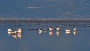 Manisanın kuş cenneti Marmara Gölünden göç
