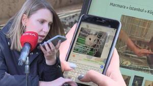 İnternette skandal ilanlar Yaban hayvanlarını satıp, otobüsle Türkiyenin her yerine yolluyorlar
