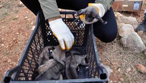 Bahçesine 1i ölü, 11 köpek yavrusu bırakıldı