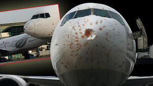Kuş sürüsüne giren uçak acil iniş yaptı
