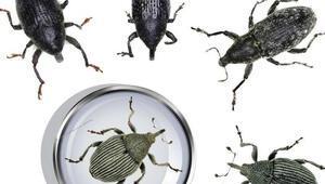 5 yeni böcek türü bulundu