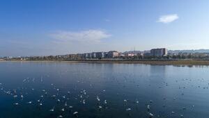 Kısıtlamayla Beyşehir Gölündeki kuş sayısı arttı