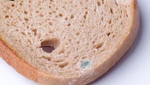 Küflenen yiyecekler hemen çöpe atılmalı mı Bazı durumlarda hayır