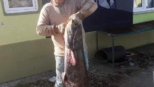 Meriç Nehrinde dev yayın balığı ağlara takıldı