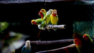 Antalya Hayvanat Bahçesinin renkli misafirleri