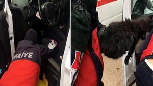 Araç içerisine sıkışan kediyi itfaiye kurtardı