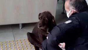 Yağmurda ıslanan köpeğe polis şefkati