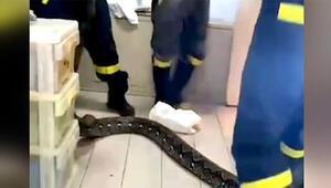 Taylandda 3.5 metrelik bir piton yılanı eve girdi