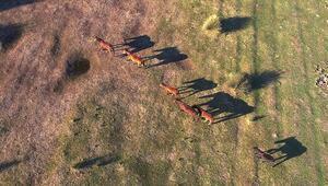 Kızılırmak Deltasındaki yılkı atları fotoğraf tutkunlarının gözdesi oldu