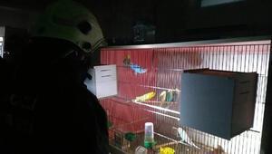 Havalandırma fanı yanan depodaki 80 muhabbet kuşunu itfaiye kurtardı