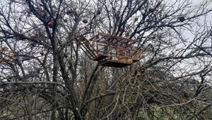 Tuzakla saka kuşu avlayan 2 kişiye 8 bin 300 lira ceza