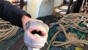 Uzmanlar balon balığı konusunda uyarıyor: Her yerde görmek mümkün