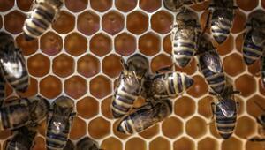 Arı Sütünün 8 Bilinmeyen Faydası