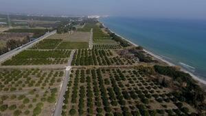 Mersinde Alata Sahili kesin korunacak hassas alan ilan edildi