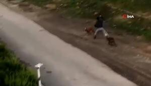 Vicdanları sızlatan anlar İki köpeğini sokak ortasında sopayla dövdü