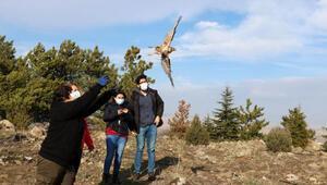 Tedavisi tamamlanan 2 şahin ile 1 çakır kuşu doğaya salındı