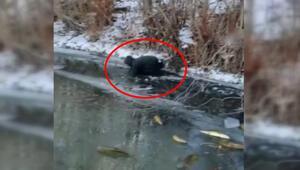 Buzun üstünde elleriyle tek tek yakaladılar İlginç anlar kameraya yansıdı