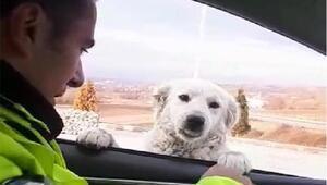Trafik polisinden ekip otosunun camından bakan köpeğe gülümseten soru