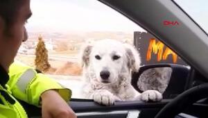 Ekip otosuna gelen köpekle polisin gülümseten anları