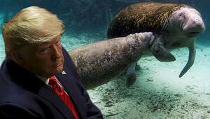 Deniz hayvanının üzerine Trump yazılması tepki topladı Yazan kişi aranıyor