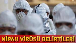 Nipah Virüsü nedir Solunum yolu enfeksiyonuna neden oluyor İşte Nipah virüsü(NİV) belirtileri ve tedavisiyle ilgili bilgiler