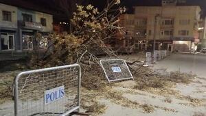 Bucakta fırtına ağacı devirdi