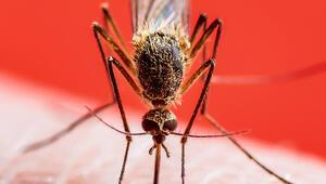 İstanbulda kışın bile sivrisinek görülür oldu Sıcaklıklar düşmediği sürece...