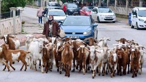 Şehirdeki çoban Menşure Teyze