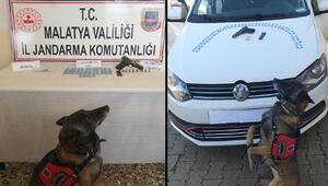 Malatyada uyuşturucuyla yakalanan 2 kişi gözaltına alındı